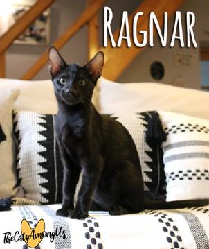 Ragnar4.jpg