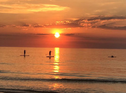 2106 - Dolphins paddle boarders