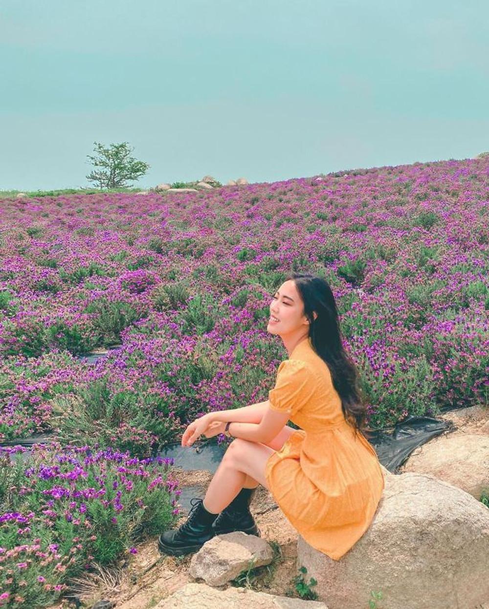 Purple-island-in-South-Korea-6