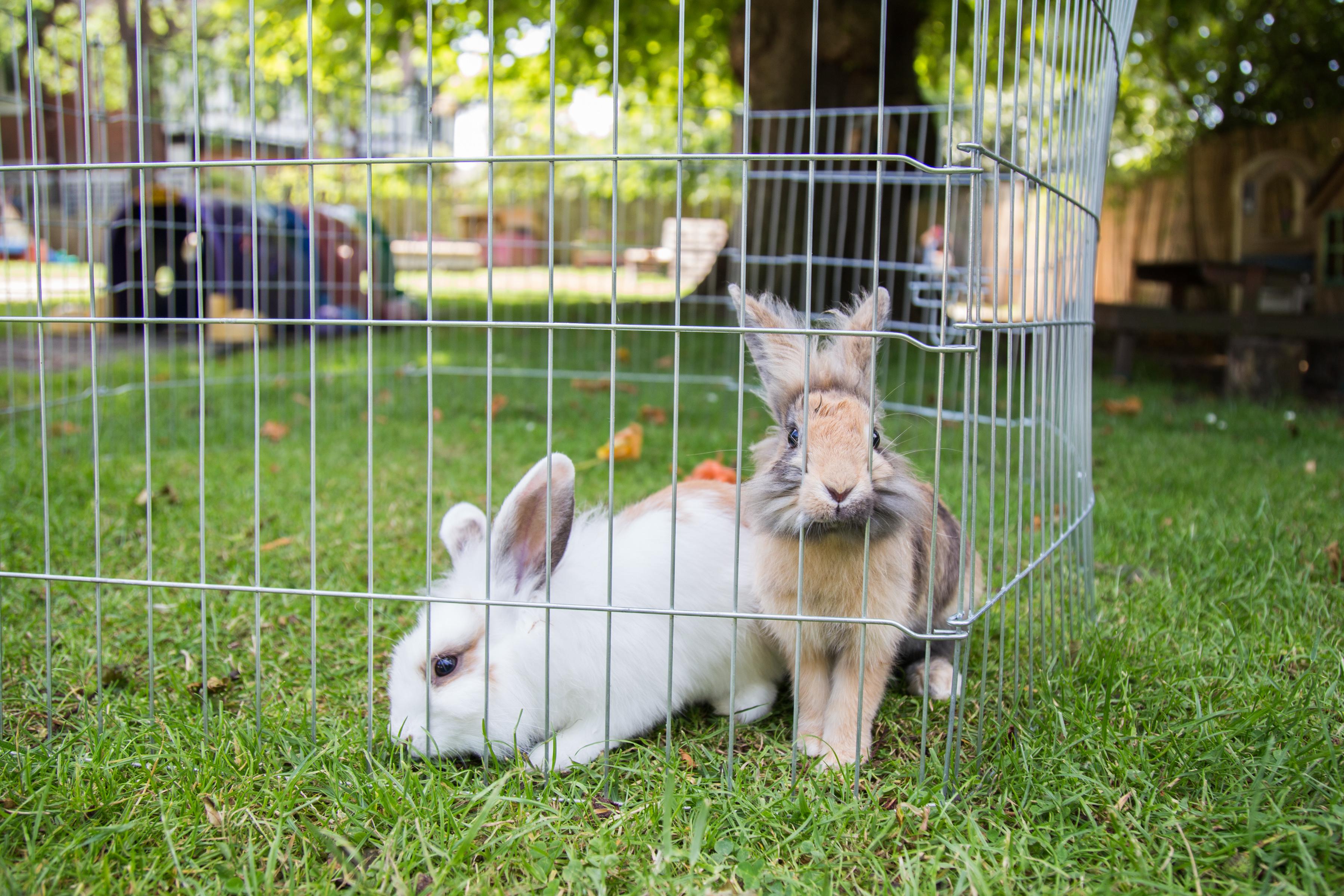 Diddy Dinos Rabbits