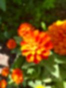 IMG_8778 2.jpg