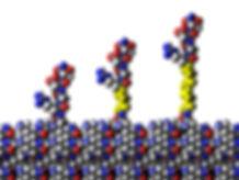 linker bioactivity necks slice3.jpg