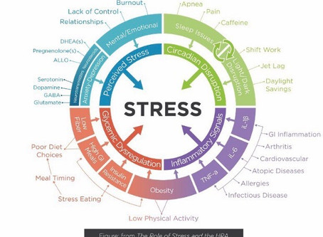 What is Stress, Anyway?
