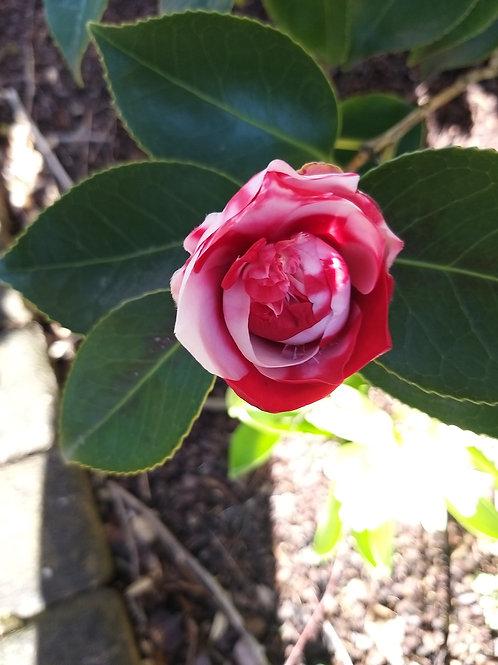 Sybille Molzberger Blumen-Gilges