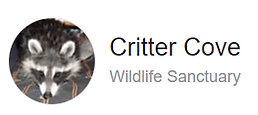 Critter Cove.png