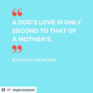 Love this quote that _dogloverepeat posted! Go and check out her store, the items are adorable and one of a kind! _#dog #dogmom #dogmomlife🐾
