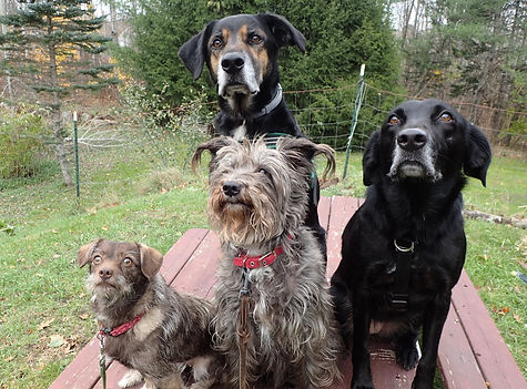 Group of dogs waiting for treats