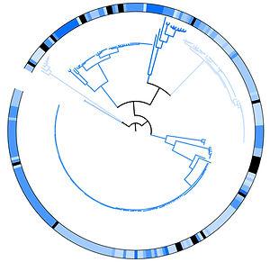 phyloAsset 2.jpg