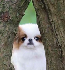Евита щенок
