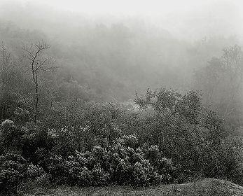 fog128bz.jpg