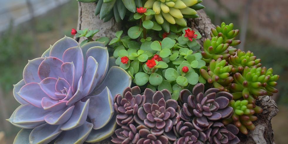 #SucculentLove