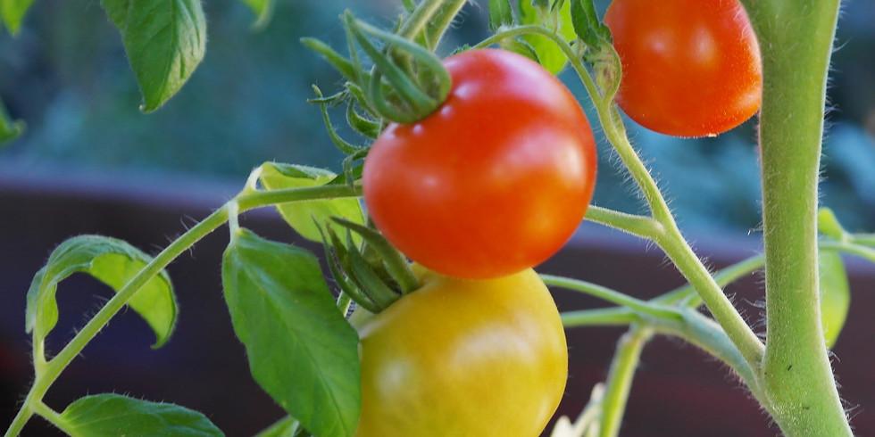 Veggie Gardening Part 2