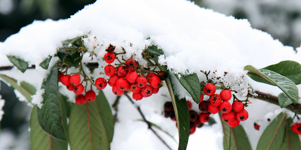 """""""Winterizing"""" Your Garden"""