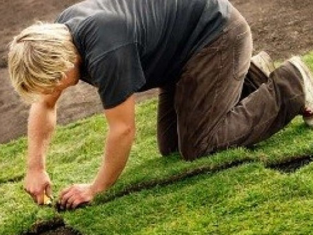 TIPS ON A LAWN MAKEOVER