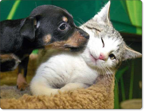 Puppy and kitten - dog - cat