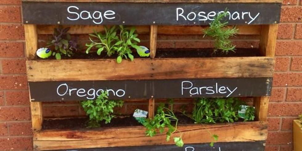 Using Herbs As Companion Plants
