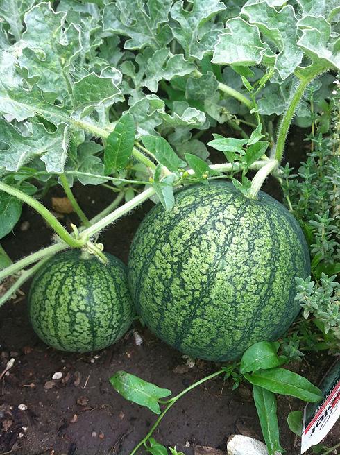 watermelon-1120661-pxhere'.jpg