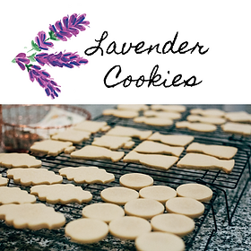 Lavender cookie recipe unbaked cookies on cookie sheets ready to bake cookies baking
