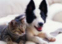 cat+dog_201.jpg