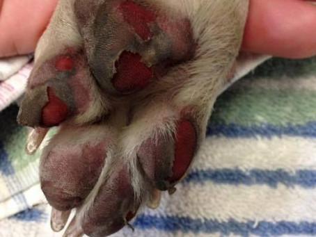 HOT WEATHER SPELLS DANGER FOR PETS