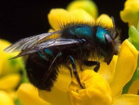 HOW TO BE POLLINATOR FRIENDLY