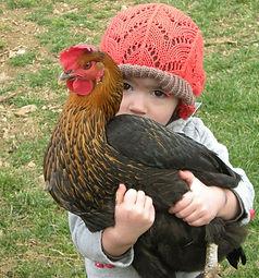 chicken-kid.jpg