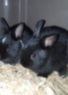 livestock and rabbit feed and supplies