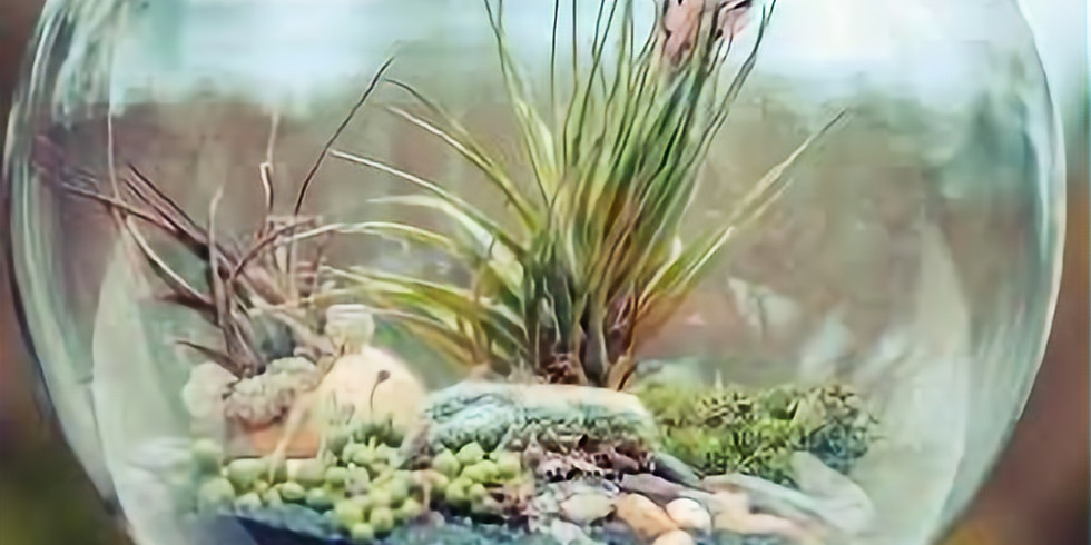 The Tiny Touch -- Terrariums & Miniature Gardens