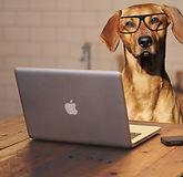 dog-using-laptop-computer_725582$%@977.j
