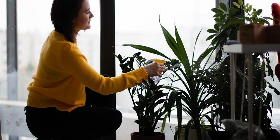 Houseplants-to-Grow