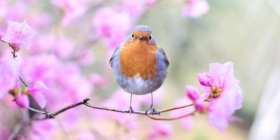Birdscaping