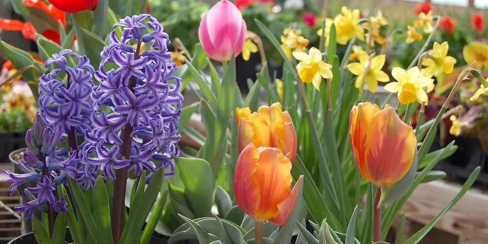 Bulbs: Garden Essentials