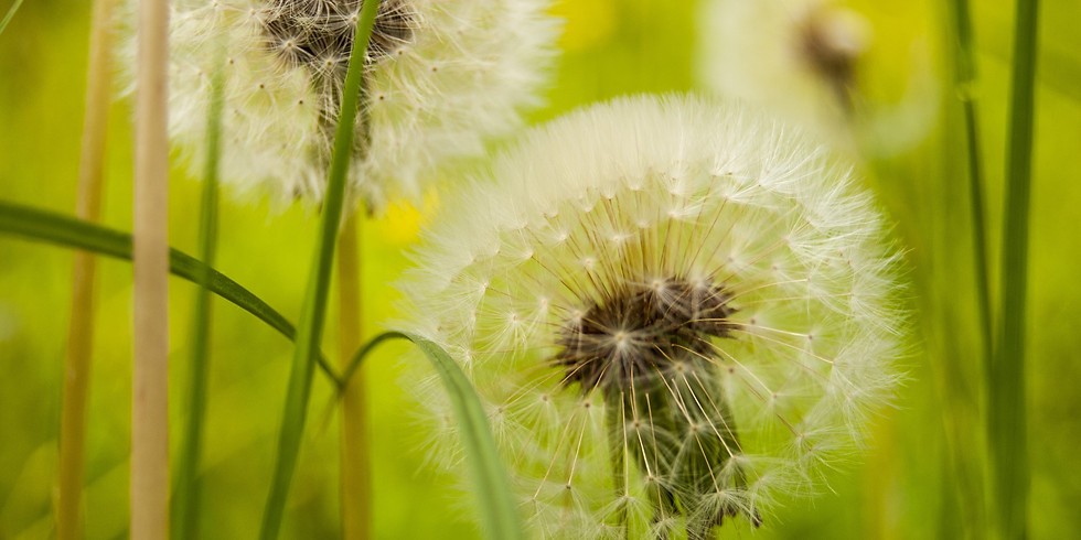 Best Organic Weed Control Products