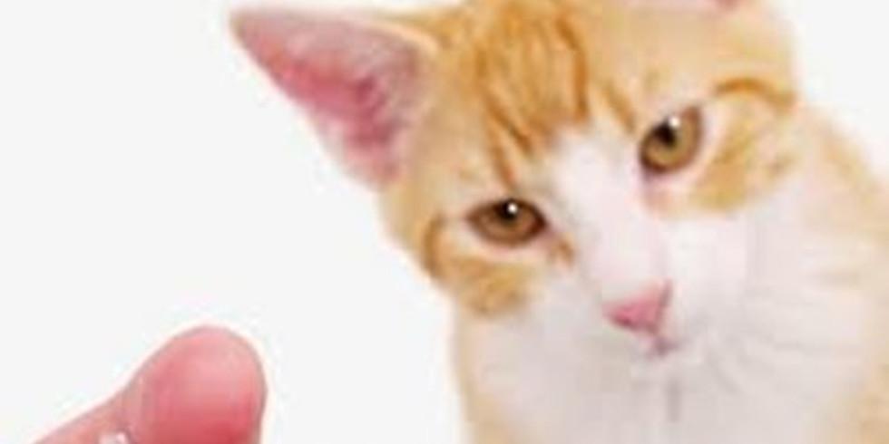 Vaccinations & Cat Adoption Event