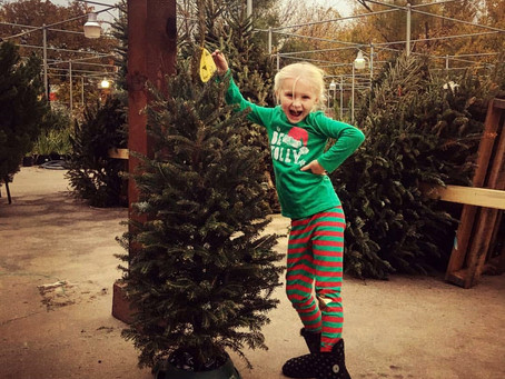 5 Essentials Tips For Christmas Tree Enjoyment