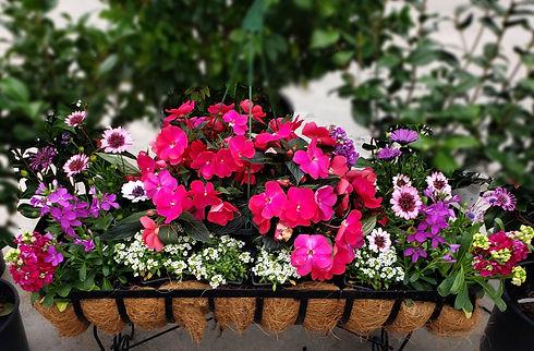 annuals_basket_103925.jpg