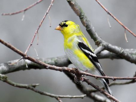 Get To Know Your Backyard Visitors During National Bird Feeding Month