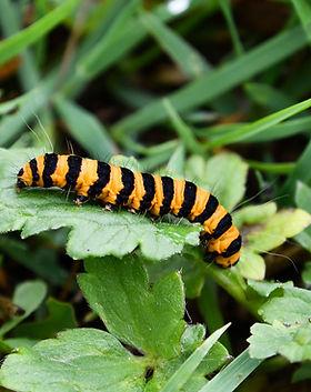 caterpillar-g57c2d56a1.jpg