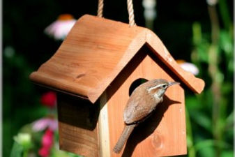 bird houses grapevine tx