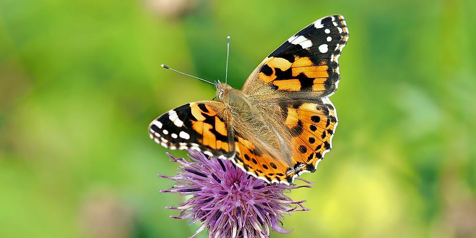 Lucy Harrell On Butterfly Gardening
