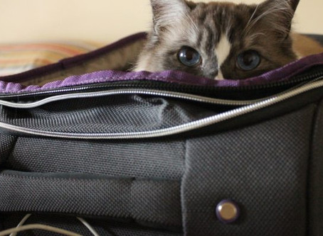 WHAT YOUR PET SITTER NEEDS TO KNOW
