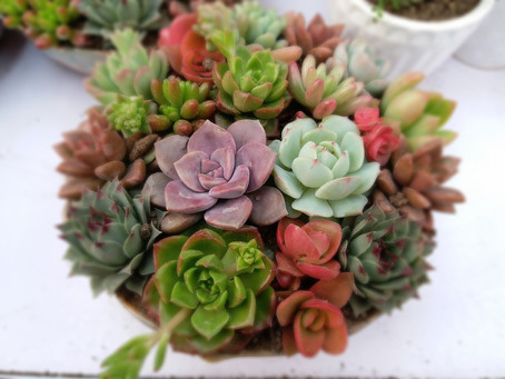 #SucculentLove - How To Grow & Care For Cacti and Other Succulents