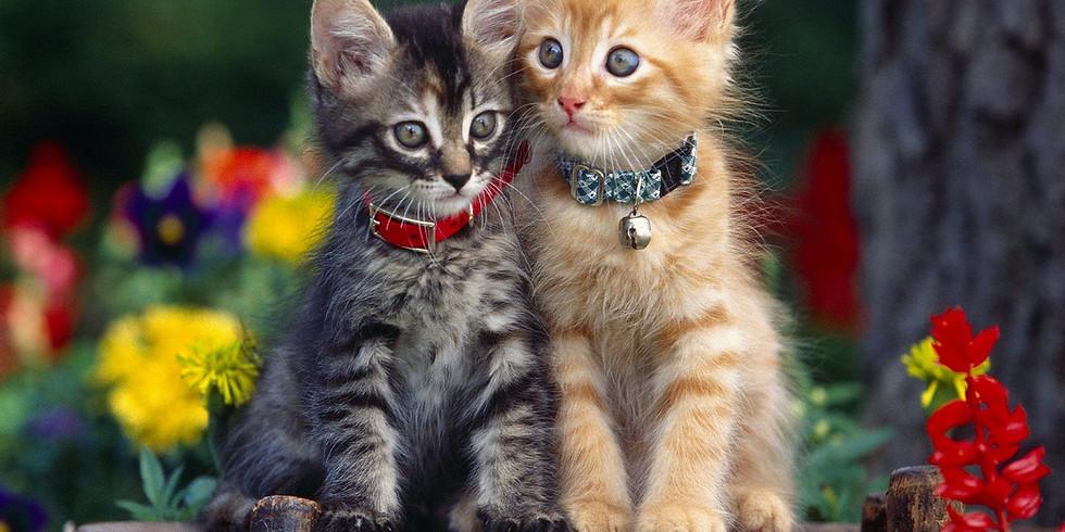Homes for Kittens