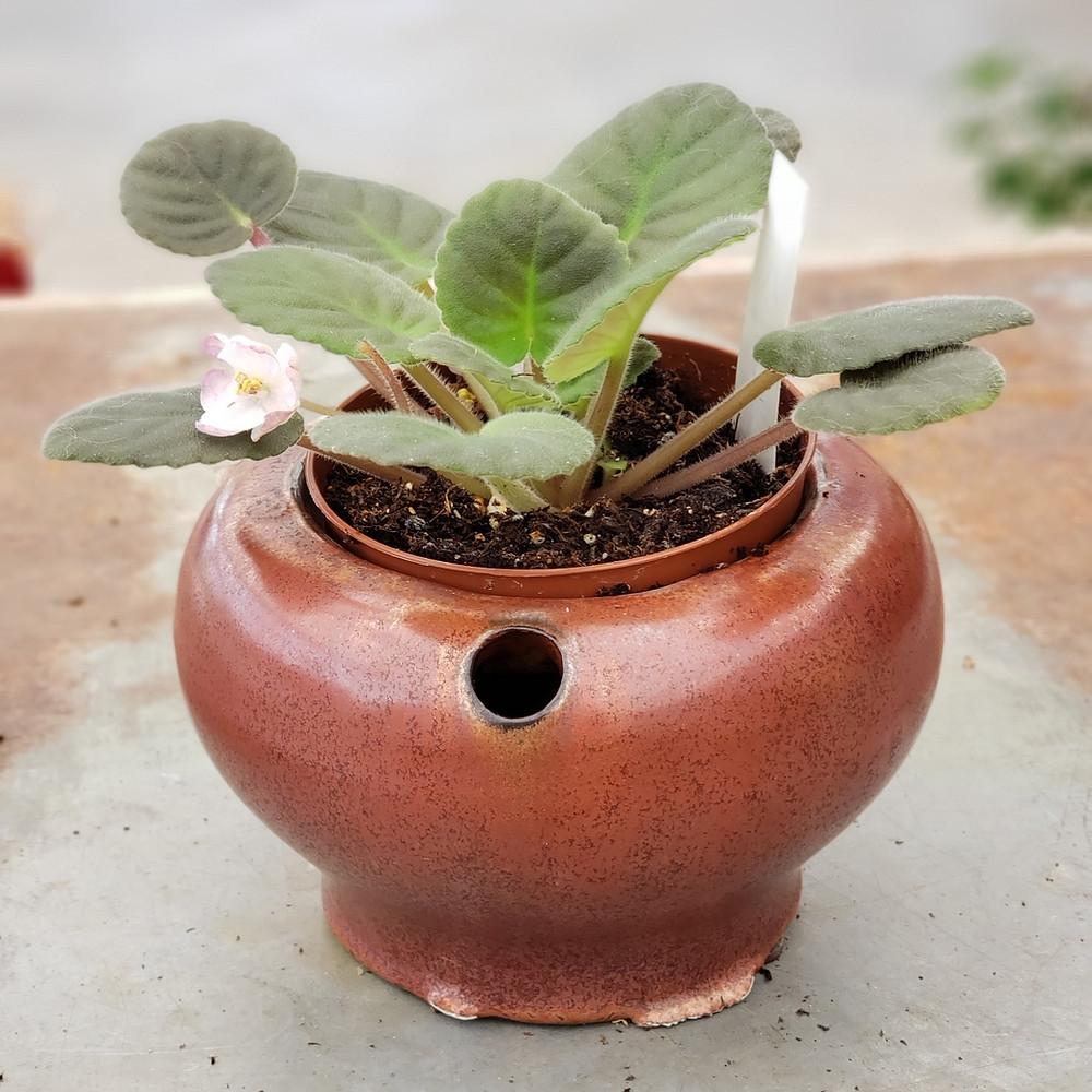 self-watering african violet pot