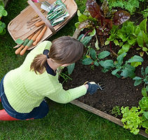 Organic Gardening - Plants & Supplies