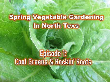 Cool Greens & Rockin' Roots: Spring Vegetable Gardening in North Texas