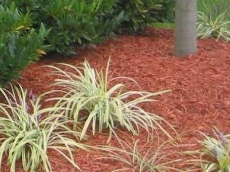 DOES MULCHING MATTER? JUST ASK MOTHER NATURE