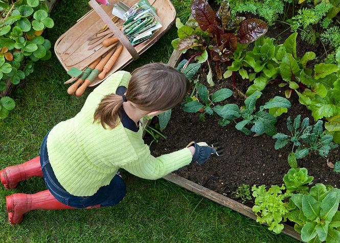 environmentally responsible gardening