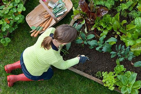 vegetable-gardener-21101-x.jpg
