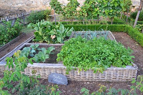 raised bed garden_807q90.jpg